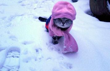 Source: http://littlehatsoncats.tumblr.com/image/1571743591
