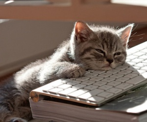 Source: http://www.gurl.com/2012/03/10/cats-sleeping-in-weird-places/